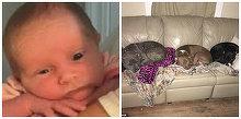 """Bebelus de cateva saptamani, sfasiat de cei trei caini ai familiei. """"Doar 5 minute am lipsit"""", a declarat mama copilului"""