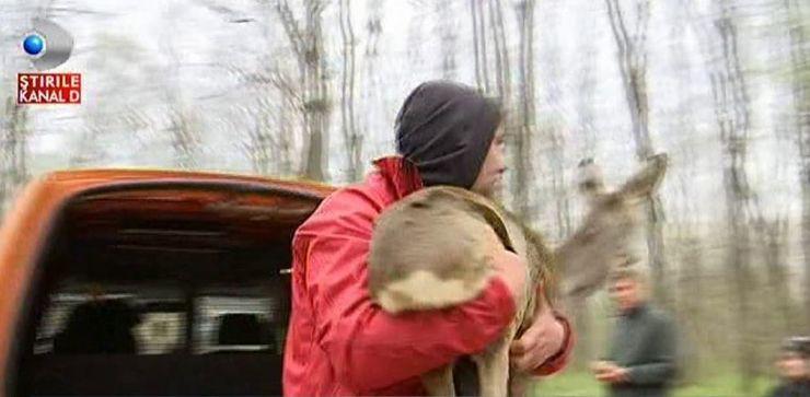 """""""E un moment trist pentru mine. M-a terminat ce am patit cu caprioara asta"""". Momentul emotionant in care o caprioara este eliberata in padure"""