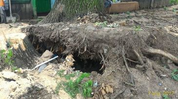 Vaslui: Familie evacuata din locuinta, dupa ce, in timpul unei furtuni, un stejar de 150 de ani a cazut peste casa