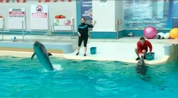Vesti ingrijoratoare de la Delfinariul din Constanta! Ce s-a intamplat cu cei doi delfini dupa ce 3 activisti au sarit in bazin pentru a protesta