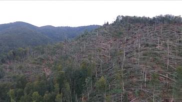 Imagini apocaliptice! Furtuna a facut ravagii in unele zone ale Romaniei! Sute de hectare de padure au fost doborate complet de vijelii