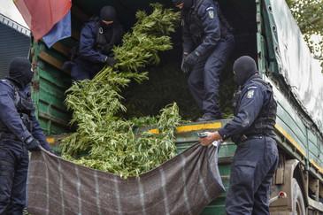 Politistii din Arad care cultivau cannabis foloseau o drona pentru a urmari plantatia si recoltau doar noaptea