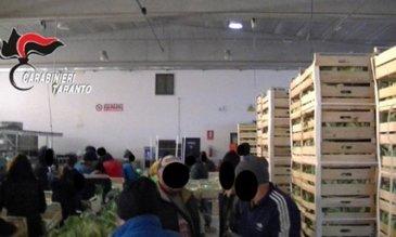Un nou caz de sclavie in Italia! 35 de romani au fost eliberati de politisti. Traiau in conditii inumane si munceau si pana la 17 ore pe zi