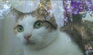 Pisica, pusa sub sechestru judecatoresc, intr-un apartament din Constanta! Proprietara plange de durere la geam cand o aude miorlaind
