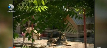 Afaceri pe bani grei cu caini comunitari. Firmele primesc autorizatii pe banda rulanta, fara sa respecte normele, in timp ce animalele sufera ingrozitor