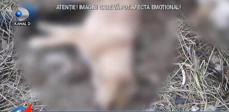 """Reportaj """"Salvam Suflete"""". Demascarea """"Afacerii maidanezul"""" din Mangalia"""