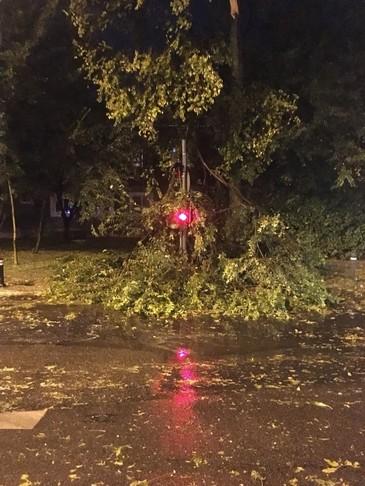 Traficul, blocat in Capitala, dupa ce un copac s-a prabusit pe reteaua de contact a troleibuzelor
