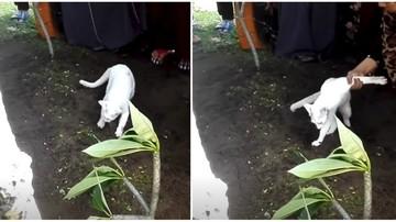 O pisica alba a aparut la inmormantarea tatalui sau si a inceput sa sape in mormant! Toata lumea prezenta si-a facut cruce si a inceput sa filmeze!