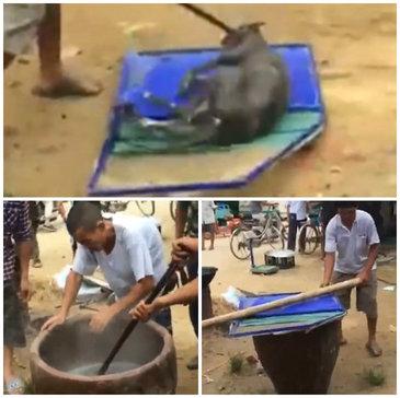 Scene greu de privit au avut loc in China. Un caine a fost fiert de viu, inainte de a ajunge pe mesele oamenilor. Carnea tare a acestuia va creste libidoul barbatilor, sunt convinsi localnicii