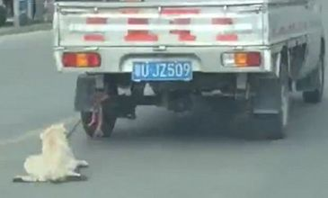 Imagini tulburatoare! Un caine este tarat de o masina pe o strada aglomerata din China