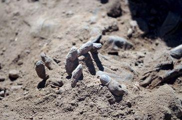 Un mormant urias cu peste 100 de cadavre decapitate a fost descoperit de soldatii irakieni in apropiere de Mosul