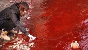 Dezastru ecologic! Rau de sange intr-un oras din China