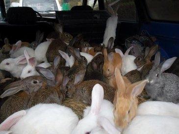 """Guvernul polonez le cere cetatenilor sa """"se inmulteasca ca iepurii"""". Gestul autoritatilor este socant"""