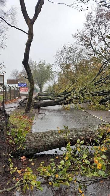 Furtuna a mai facut o victima! Un barbat de 59 de ani a murit in Germania