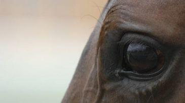 Socant! Un barbat a fost prins ca facea sex cu un cal si pretindea ca e nevinovat pentru ca animalul si-a dat acordul