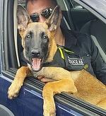 Antrenamente speciale pentru Alma, cainele -politist al lui Christian Sabbagh!
