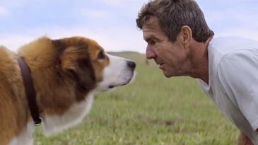 """Echipa de productie a filmului """"A Dog's Purpose"""" a fost acuzata de cruzime impotriva unui caine. Scenaristul productiei raspunde acuzatiilor"""