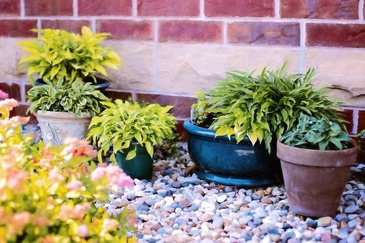 Cum sa salvezi o planta uscata. Cele trei ingrediente care fac minuni