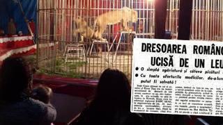 """Tragedia din lumea circului! Dresoare romanca, ucisa in arena de leul pe care l-a crescut de mic - """"Tasnea sangele din ea, iar in momentul ala doua gravide au avortat instant!"""""""