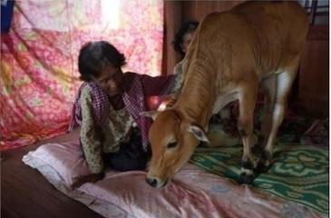 """""""Acest vitel este sotul meu si voi avea grija de el toata viata!"""" Relatia care a socat locuitorii mai multor sate"""