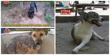 Imagini dramatice cu animale care au fost victimele oamenilor. Bietele suflete abia au scapat cu viata din mainile celor care le-au facut rau