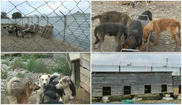 Ce s-a schimbat la adapostul public de animale din Baicoi, la 4 luni de cand au fost dezvaluite conditiile groaznice in care traiesc zeci de caini
