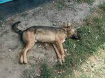 Cruzime fara margini intr-o localitate din Romania - Mai multi caini au fost otraviti cu furadan - Imaginile astea vorbesc de la sine