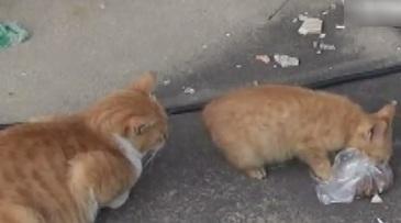 Imagini virale! Ce facea aceasta pisica cu hrana primita de la oameni
