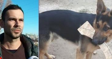 Un hot din Constanta a vrut sa vanda cainele furat pe internet. Proprietarul cere ajutorul Politiei pentru a-si recupera animalul de companie