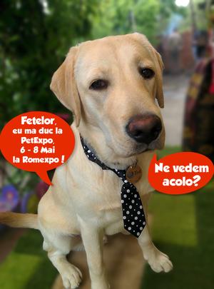 """Aproape 45.000 de like-uri pentru concursul """"Mascota Pet Expo 2016"""""""