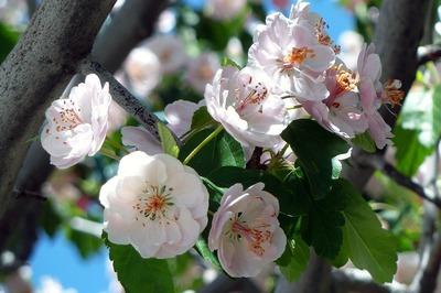 Traditii si superstitii de Florii. Ce nu ai voie sa faci in Duminica Floriilor. E mare pacat!