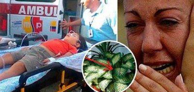 Fiul ei a fost otravit de aceasta planta! Multe familii o au in casa