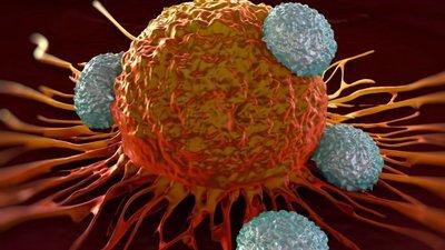 Aceasta este planta care face miracole in cazurile de cancer!