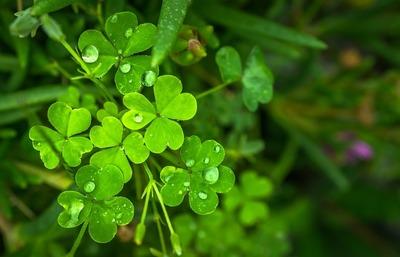 Superstitii romanesti despre noroc: ce sa faci ca sa ai noroc
