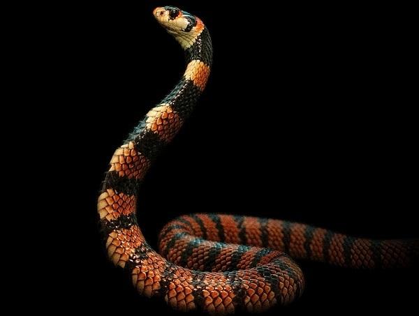 """O expoziţie temporară de reptile vii, găzduită din 10 octombrie de Muzeul """"Antipa"""""""