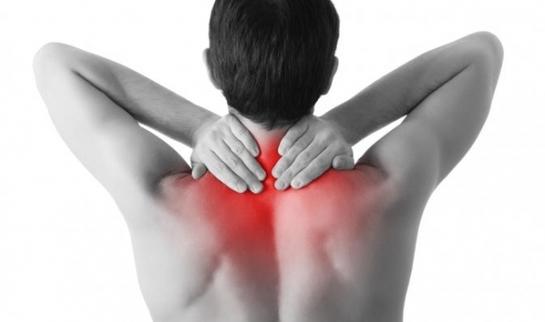 Febra musculară – teorie şi practică