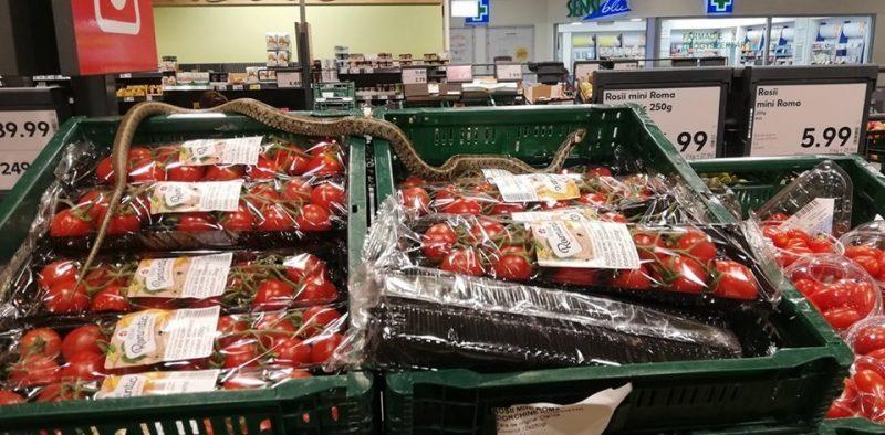 Şarpe uriaş printre cutiile cu legume dintr-un supermarket. Imagine virală