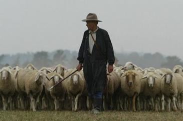Cum arata declaratia de avere a unui cioban autentic! Un pastor cu numele din buletin al lui Nicolae Guta a vrut sa devina consilier local