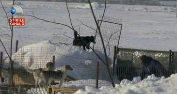 500 de animale salvate din situatii critice. Au ramas inzapezite, insa oameni cu suflet mare au scos animalele de sub nameti