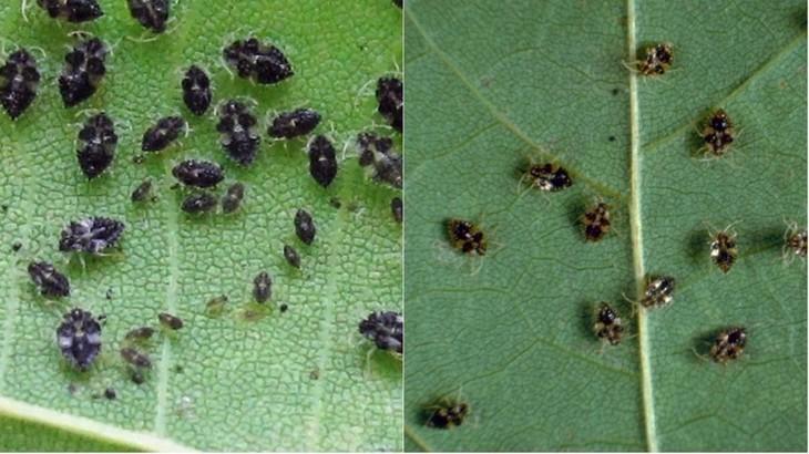 Insectele ciudate au invadat capitala si imprejurimile! Cum sa scapi de disconfortul produs de acestea
