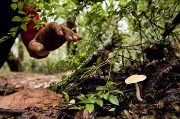 Descoperire incredibila! Un barbat a gasit un pui de caprioara cu doua capete in timp ca culegea ciuperci intr-o padure!