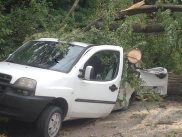Un copac a cazut pe o masina si o locuinta in Brasov! Mai multe persoane au fost ranite, printre care si doi copii!