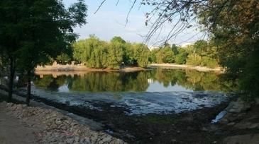 S-a aflat care e cauza dezastrului ecologic din Parcul Bordei, unde zeci de rate au fost gasite moarte