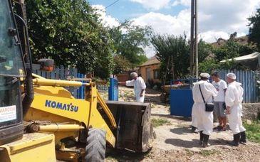 Insetati de pesta porcina! Locuitorii din Calarasi sunt speriati pentru ca panza freatica poate fi afectata de porcii ingropati
