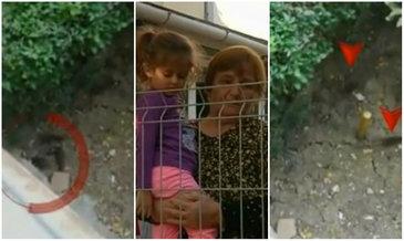 Dorm printre sobolani! Mai multe familii dintr-un bloc din Iasi sunt terorizate de rozatoarele care misuna printre copii