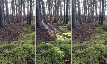 Incident bizar surprins de un bărbat în pădure! A filmat pământul cum respiră