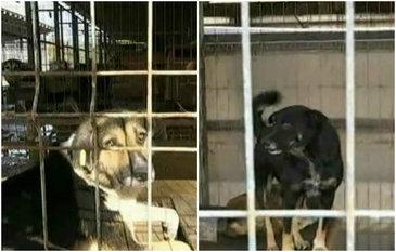 Imagini cumplite de la adapostul public Feteni. In timp ce animalele traiesc in conditii de cosmar, autoritatile se prefac ca nu vad nimic. Reactia lor e halucinanta